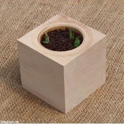 Aloe vera, Sowing kit