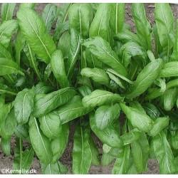 Mibuna (Brassica rapa var....