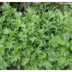 Mizuna, Brassica rapa var....