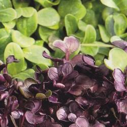 Microgreens 'Micro Greens Mix'