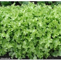 Pluksalat 'Salad bowl'