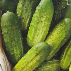 Drueagurk 'Piccolo Verde di...