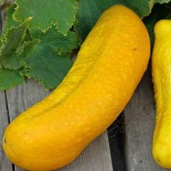 Banan-agurk 'Gele Tros',...