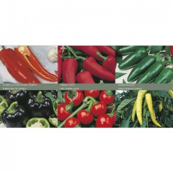 Pepper Collection 'Hot &...