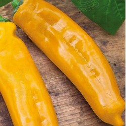 Snack peber 'Zazu', Økologisk