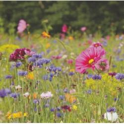 Blomsterblanding 'Nectar',...