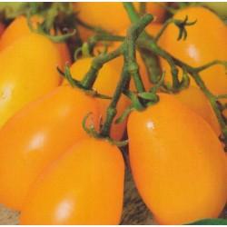 Tomato 'Peardrops'