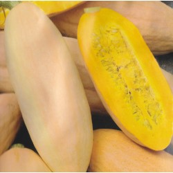 Winter squash 'Pink Banana...