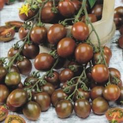 Cherrytomat 'Brown berry'