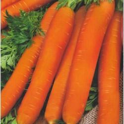 Carrot 'Naomi'