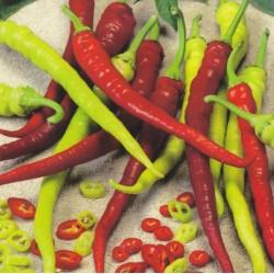 Sweet Pepper 'Spiralus'