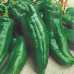 Sweet Pepper 'Torricello F1'