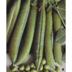 Pea, Tall 'Telephone', Organic
