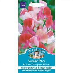 Lathyrus odoratus 'Perfume...