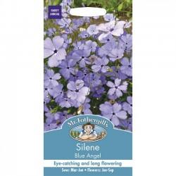 Silene oculata 'Blue...