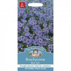 Brachycome iberidifolia...