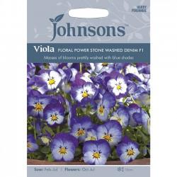 Viola cornuta 'Floral Power...