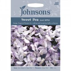 Lathyrus odoratus 'Lilac...
