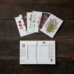 Greeting Cards - Summer...