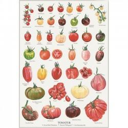 Plakat A2 - Tomat