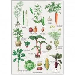 Poster A2 - Kitchen Garden