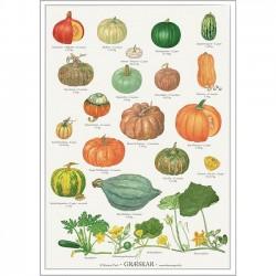 Poster A2 - Pumpkin