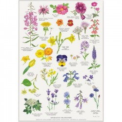 Poster A2 - Edible Flowers