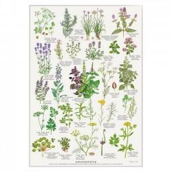 Poster A2 - Herbs
