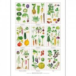 Plakat A2 - Økologisk have
