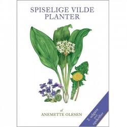GROW MAGIC Greeting card, Chilli bouquet
