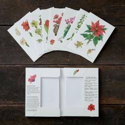 Kort - Juleblomster, 8 stk
