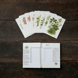 Greeting Cards - White...