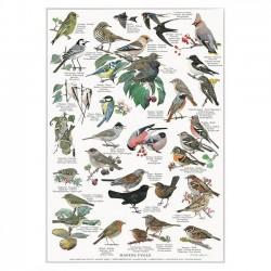 Poster A2 - Garden Birds