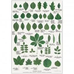 Plakat A2 - Træernes blade