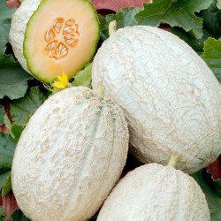 Cantaloupe melon 'Emir F1'