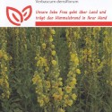 Papaver somniferum 'Laurens Grape', Valmue