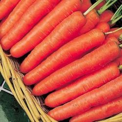 Carrot 'Autumn King 2',...