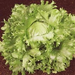 Lettuce, Iceberg 'Regina...