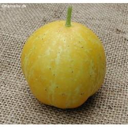 Citronagurk 'Lemon'