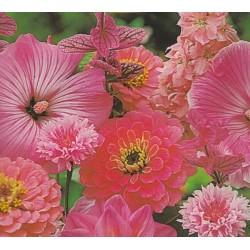 Blomsterblanding - Rosa