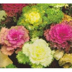 Brassica oleracea,...