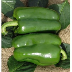 Sweet Pepper 'California...