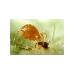 Rovmider mod spindemider,...