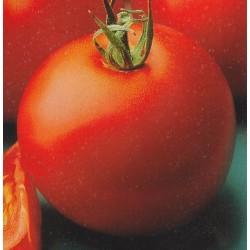 Tomato 'Matina'