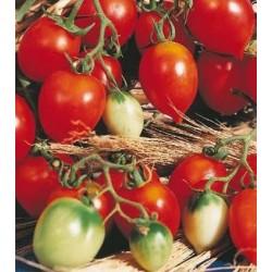 Tomato 'Principe Borghese'