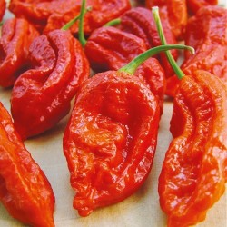 Chili Pepper 'Bhut Jolokia'