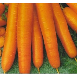 Carrot 'Francis'