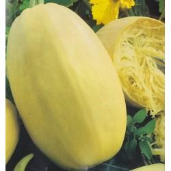 Pumpkin 'Makaronova'