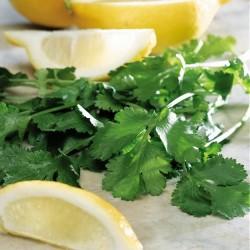 Coriandrum sativum 'Lemon'...
